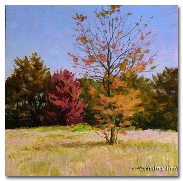 Fall Color, Acrylic, Audrey Bechler Waldoboro, Maine